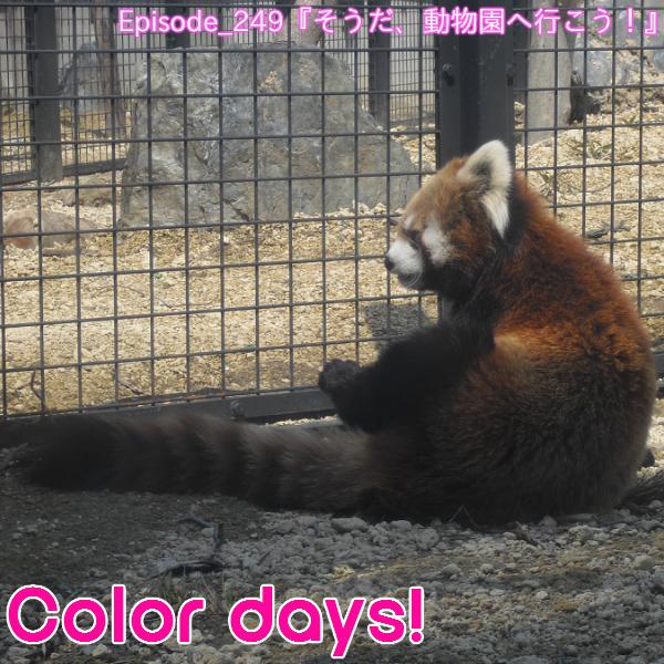 Episode_249『そうだ、動物園へ行こう!』